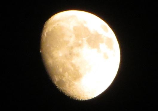 Orange Moon 010